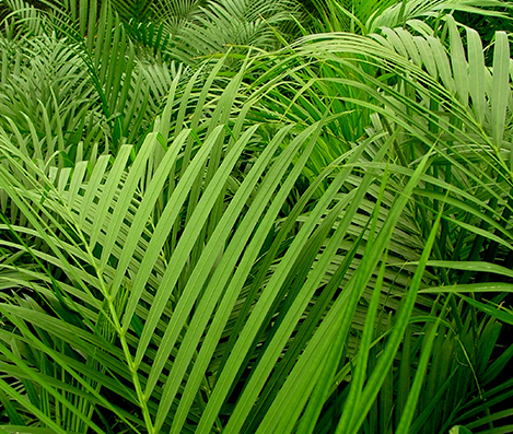 Fertilizers for Palms